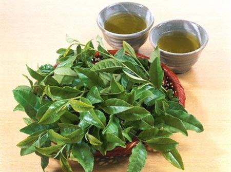 Cách chữa mụn bọc bằng trà xanh đơn  giản đến bất ngờ 2