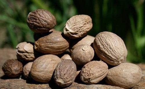 Chữa mụn nhọt bằng hạt nhục đậu