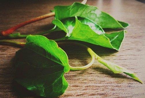 chữa mụn nhọt bằng lá cây 2